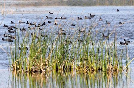 Oasi Lago Salso